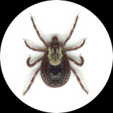 Tick-borne encephalitis is now endemic in 27 European countries